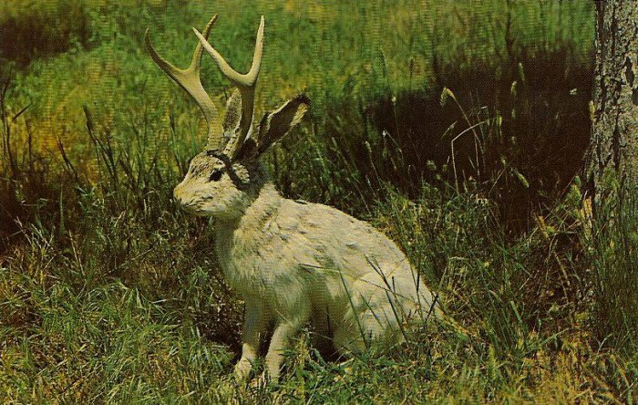 1 Jackalope Seated PC 1